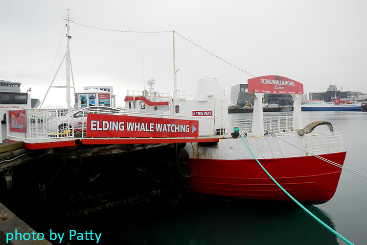 whale watching centre